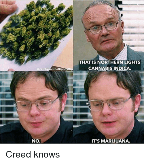 that-is-northern-lights-cannabis-indica-scatchyponthefli-ppityi-no-its-34311812.png